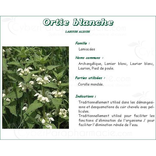 ORTIE BLANCHE PLANTE IPHYM, Ortie blanche plante, vrac. - sac 50 g