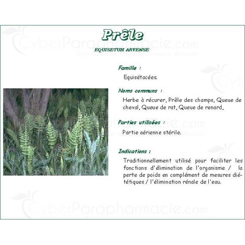 HORSETAIL VITAFLOR LITTLE, Small horsetail plant, bulk. - Bt 100 g