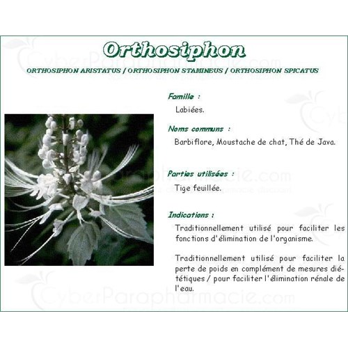 ORTHOSIPHON SHEET PHARMA PLANT orthosiphon Leaf bulk. - Cut bag 250 g